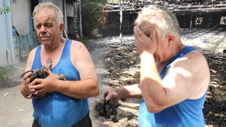 12 bin hindi yavrusu öldü! Çiftlik sahibi gözyaşı döktü